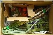 らでぃっしゅぼーやで届いた野菜