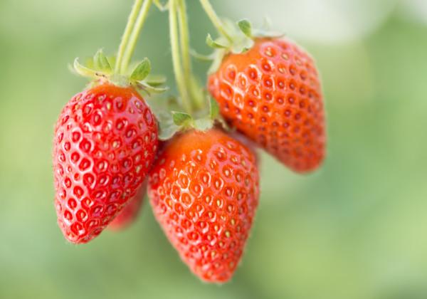 特別栽培でつくられた野菜や果物