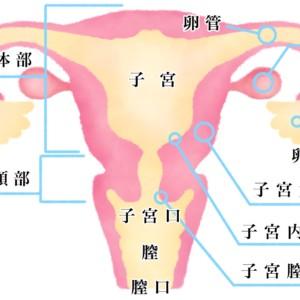 子宮全摘出